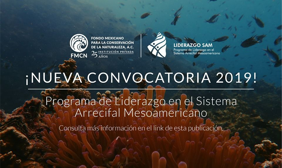 Convocatoria 2019: Programa Liderazgo en el Sistema Arrecifal Mesoamericano