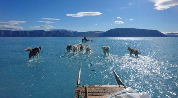 Groelandia: Espectacular imagen de unos perros tirando de un trineo sobre el agua (El Español)