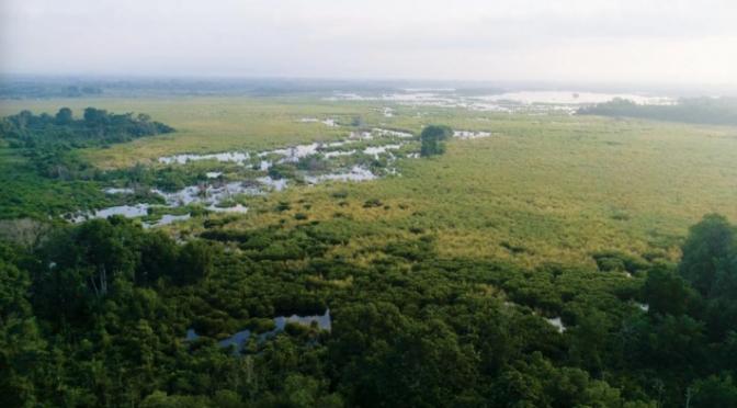 México: Conservación de ecosistemas y comunidades en la Reserva de la Biosfera La Encrucijada (Earthworm)