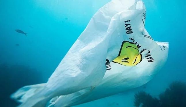India: Desarrollan bolsa que en el agua se convierte en comida para peces (El Universal)