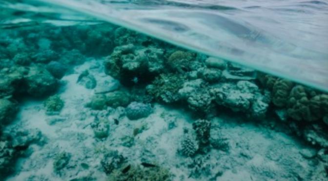 CDMX: Sargazo pone en riesgo a los arrecifes advierte investigador (Tec.mx)