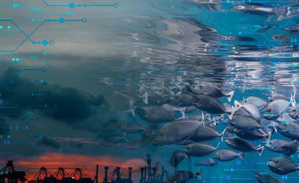 CDMX: Cambio climático podría reducir 17% de los peces y otras especies marina para 2100 (My Press)
