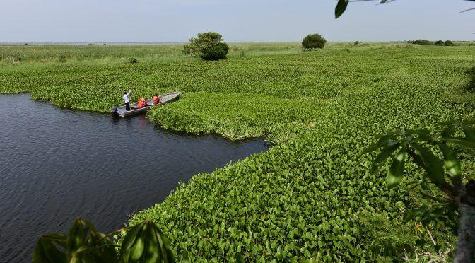 Tabasco: Incomunica lirio acuático a El Espino (Novedades de Tabasco)