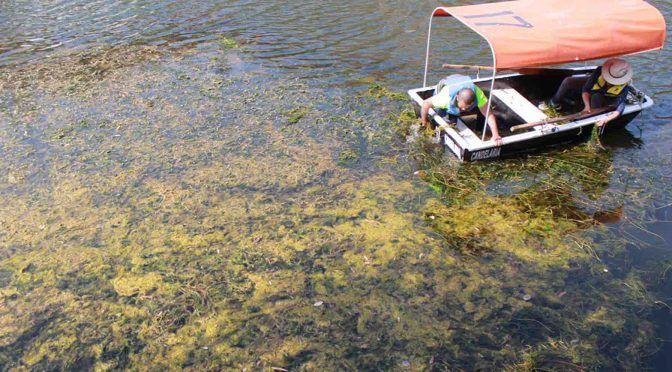 Guanajuato: Contradice Delgado Zárate a la Comisión Estatal del Agua por plaga (Periódico Correo)