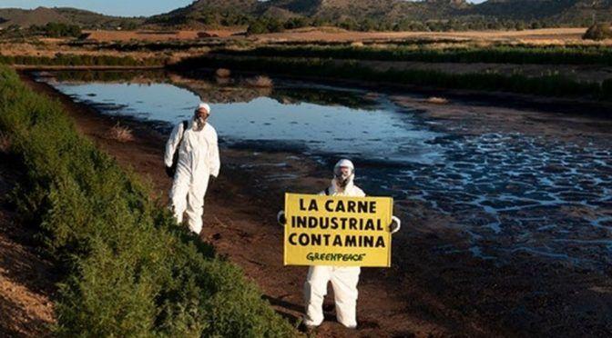 """España: Greenpeace entra en una macrogranja de cerdos de Hellín que considera """"la más contaminante del País""""(Diario de la Mancha)"""