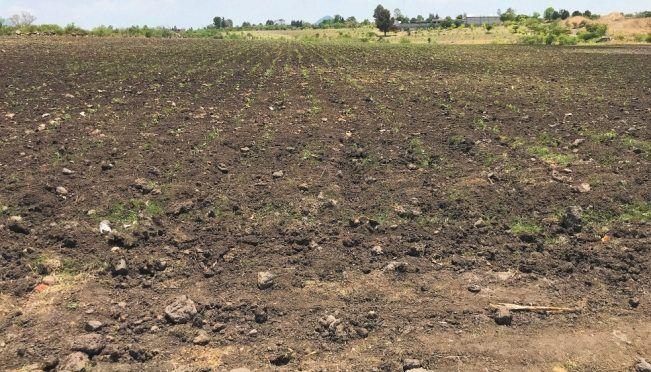 Querétaro: Falta de lluvias obliga a retrasar las siembras (El Universal)