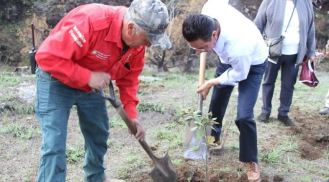 Hidalgo: Siembra Contigo» al rescate de las áreas afectadas por incendios forestales( nq radio)
