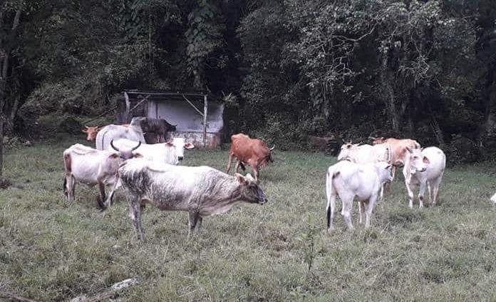 San Luis Potosí: Agobia sequía al sector ganadero (Pulso)