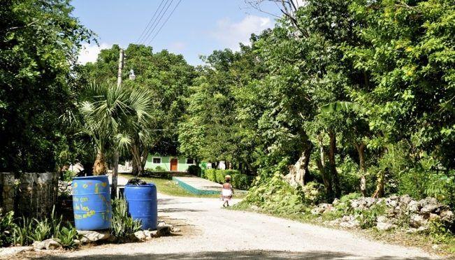 Yucatán: Se pierde el 70 por ciento de selvas y bosques del país (El Universal)
