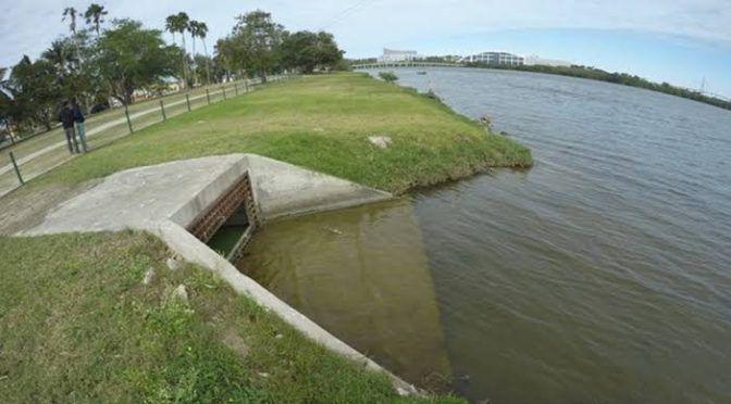 Tamaulipas: Aparecen muertos cientos de peces (cinco)
