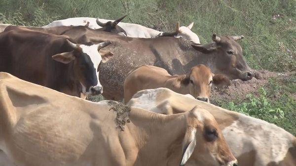 Veracruz: Niega Sedarpa muerte de ganado por sequía (Diario a.z)