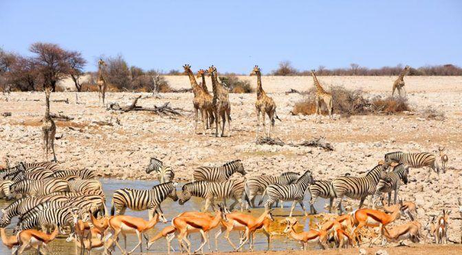Namibia:Subastará un millar de animales salvajes por la escasez de agua (La Vanguardia)