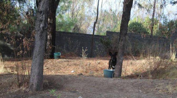 Tlaxcala: Colocan bebederos para fauna silvestre, en Panotla (El Sol de Tlaxcala)