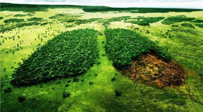 Michoacán: Ario de Rosales celebrará la Cuarta Feria Ambiental (primera plana)