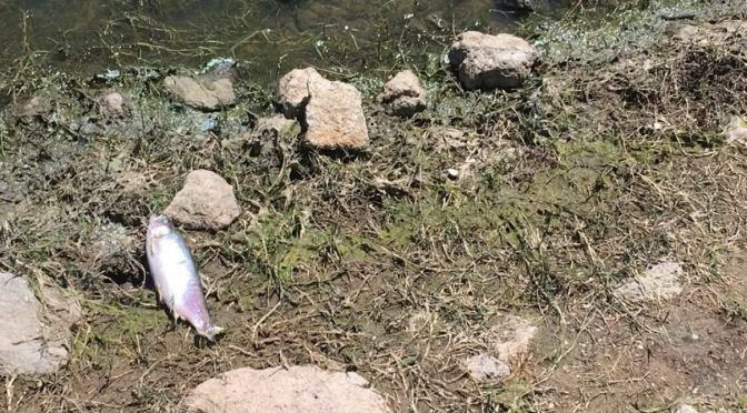 San Luis Potosí: Alistan denuncia penal por contaminación en presa de Mexquitic (Quadratin)