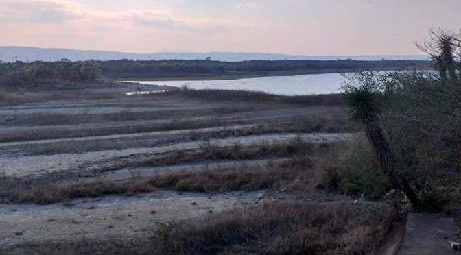 San Luis Potosí: Presa La Lajilla se está secando (Pulso)