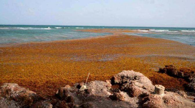 Caribe: Ligan 'plaga' de sargazo con contaminación (El Horizonte)