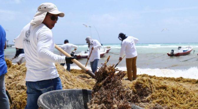 Quintana Roo: Utilizan el sargazo para purificar agua y crear desechables (Quadratin)
