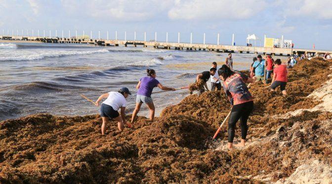 CDMX: Bonito país: las playas son privadas, pero el sargazo sí es de todos (Zenzontle 400)