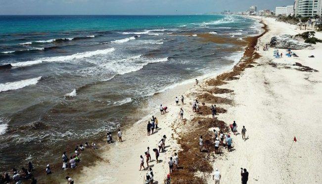 CDMX: Qué es el sargazo y en qué playas mexicanas se encuentra (El Universal)