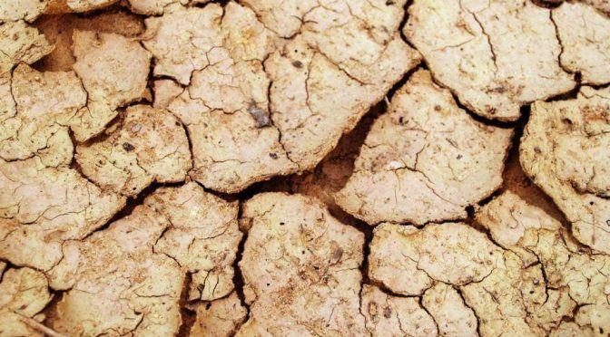 Puerto Rico: Senado aprueba investigar efectos de la sequía en agricultores (jornadapress)