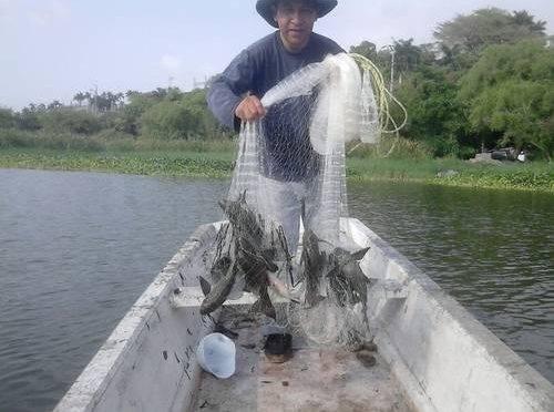Veracruz: Reportan pescadores del sur baja de 90% en pesca de especies de agua dulce (La jornada de Veracruz)