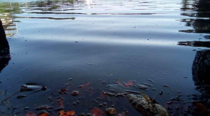 Tabasco: Más peces muertos en 'Las Ilusiones'; la laguna luce muy contaminada (Xeva)