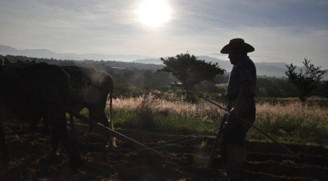 Oaxaca: El 63% de los municipios cuentan con algún grado de sequía (El Imparcial)