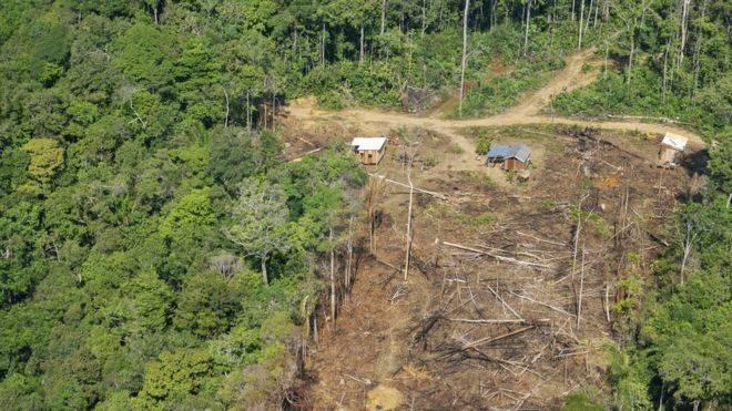 Amazonas: por qué se ha acelerado la deforestación con la llegada de Bolsonaro a la presidencia de Brasil (BBC)