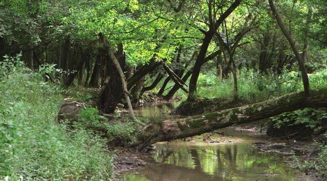 Oaxaca: Van por rescate del río Jabalí (El mundo)