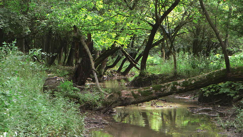Guanajuato: Para evitar riesgos, limpian arroyos en Irapuato (Milenio)