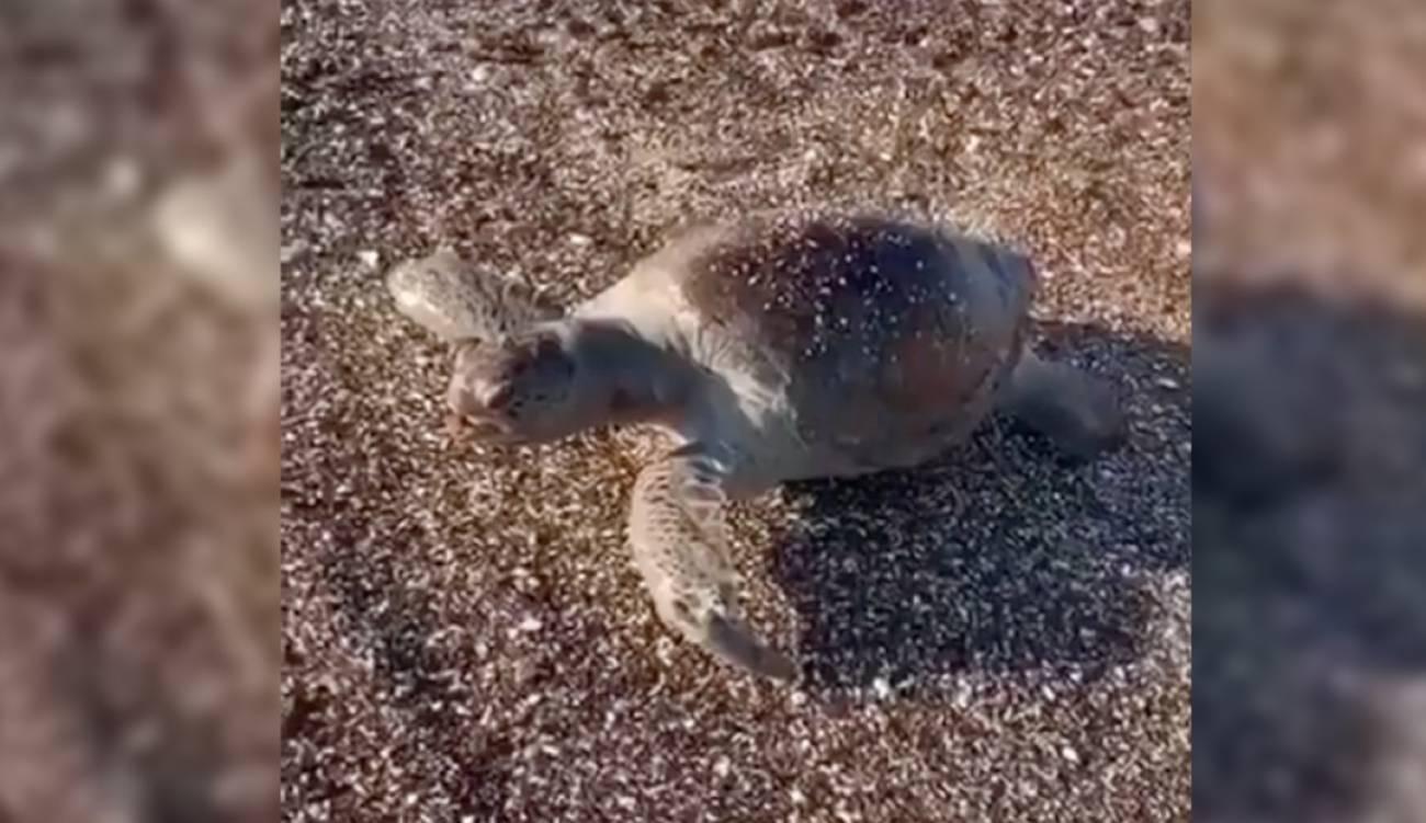 En Mar de Cortés captan especies marinas sin vida tras derrame de ácido (W Radio)