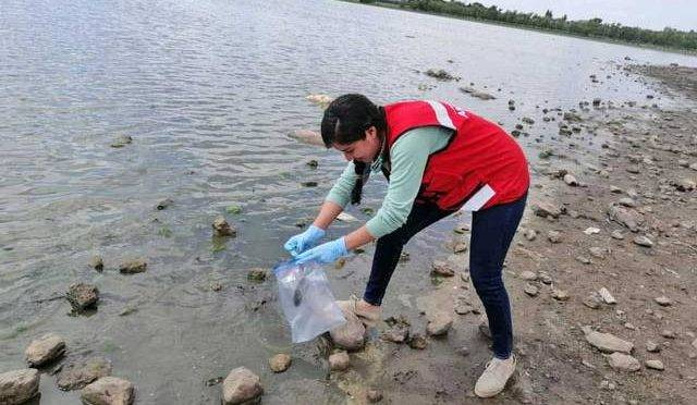 Zacatecas: Mueren miles de peces en presa  (unotv.com)