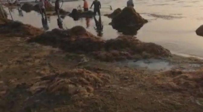 Oaxaca: Sargazo y aguas negras afectan a pescadores (Excelsior)