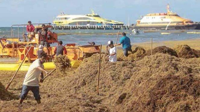 Tulum: Turistas desdeñan playas por sargazo en Quintana Roo (Excelsior)