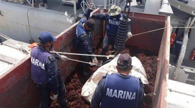 CDMX: Marina retira 38 mil 892 toneladas de sargazo en casi 3 meses (Excelsior)