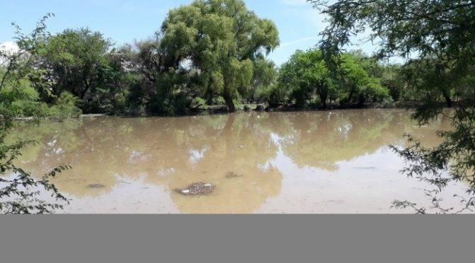 Zacatecas: aseguran que el nacimiento de mosquitos no afectará la salud (Imagen Zacatecas)