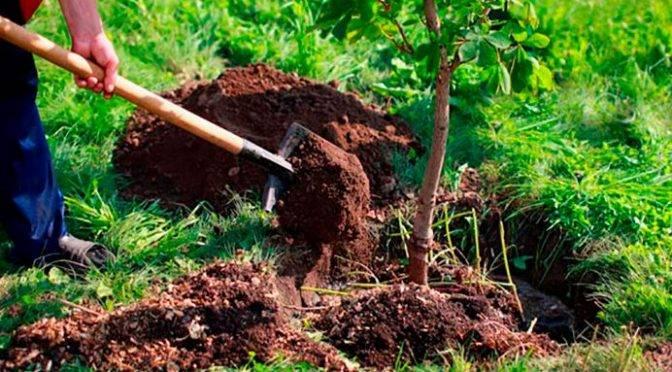 Puebla: Empresa de Agua dona 3 mil 780 árboles para contribuir con el medio ambiente (Política Puebla)