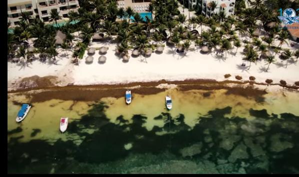 Playa del Carmen: Sargazo las playas que parecen pantanos (El Universal)