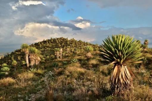 San Luis Potosí: Minera quiere explotar tierras en zona de Wirikuta (Metropolo San Luis)