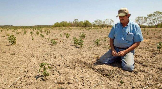 Tamaulipas: Más de 80 mil hectáreas de cultivos se pueden quedar sin sembrar (gaceta.mx)
