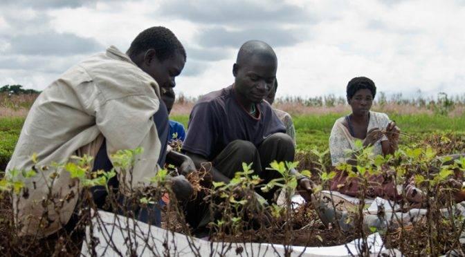 Africa: El brutal impacto de la deforestación en el acceso al agua potable (resumen latinoamericano)