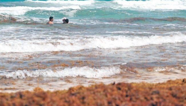 Cancún: Instalan barrera contra sargazo en Riviera Maya (El Universal)