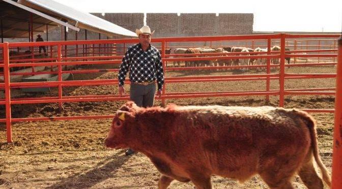 Durango: muere ganado a causa de Sequía (El Siglo de Durango)