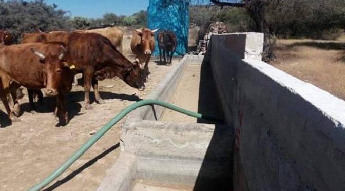 Tequisquiapan: Facilitan tanque de agua a productores de ganado (El Sol de San Juan del Río)