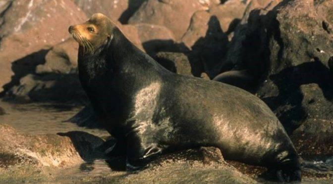 México: Las Islas y Áreas Protegidas del Golfo de California inscritas en la Lista del Patrimonio Mundial en Peligro (ONU)