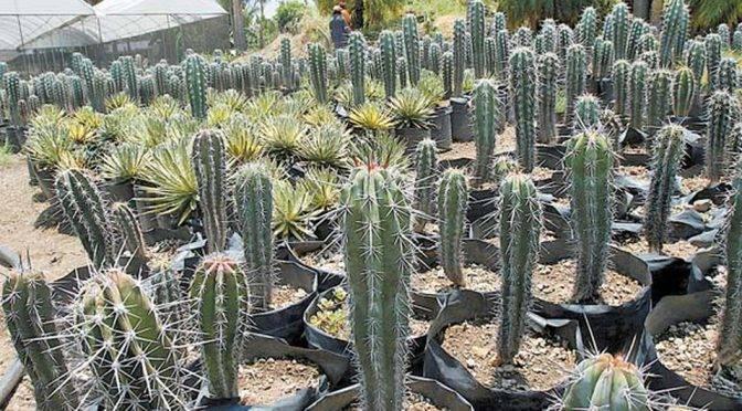 Coahuila: Reconversión vegetal, una alternativa frente al abatimiento de pozos de agua (Milenio)