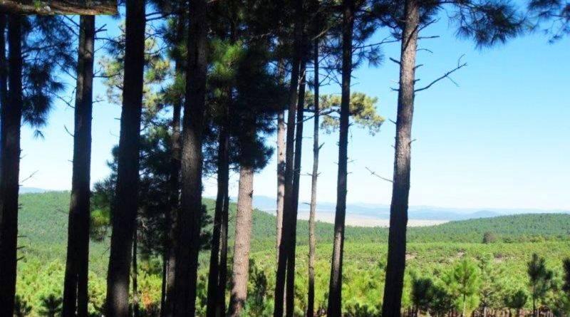 Chihuahua: Obtienen el primer registro de nutrias de río (El Portal de Salta)