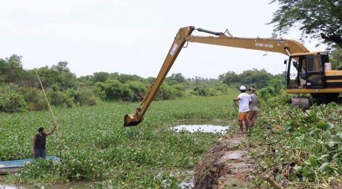 Guerrero: Limpieza de lirio acuatico en el rio Colacho de Acapulco (MPS Gurrero)