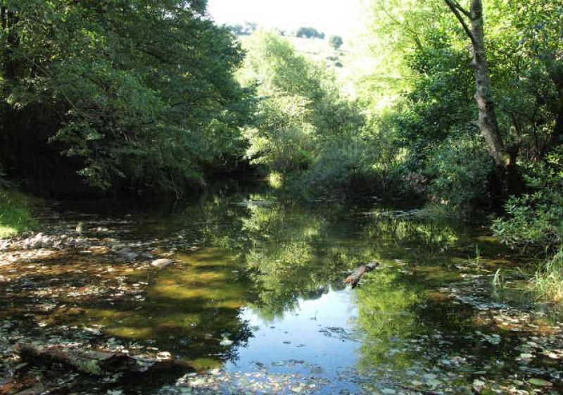 Estrategia para la Conservación del Bosque de Agua 2012-2030